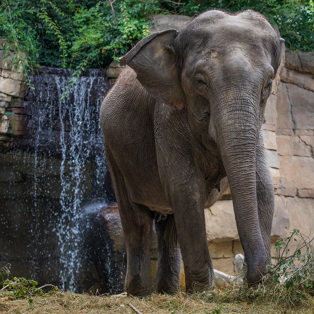 Elephant & Waterfall